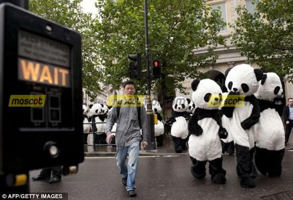 khuấy đông với những chú gấu trúc với trang phục Mascot gấu trúc 4